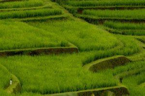 Bali (Indonesia), 2014 - Foto di Marco Bertagni (Archivio fotografico SGI)