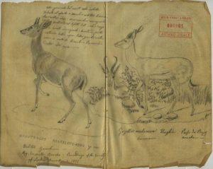 Disegno all'interno del Catalogo zoologico