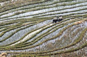 Sa Pa (Vietnam), 2011 - Foto di Marco Bertagni (Archivio fotografico SGI)