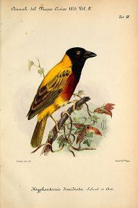 Illustrazione in Viaggio nel Mar Rosso, nel territorio dei Bogos 1870-71
