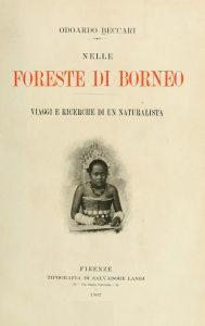 Nelle foreste di borneo 1902