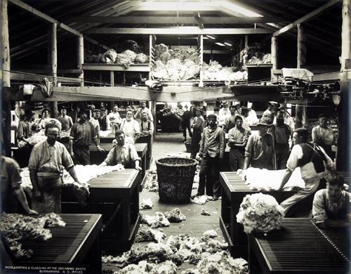 Mercoledì Fotografico –  Tosatura della lana nel nuovo Galles del Sud